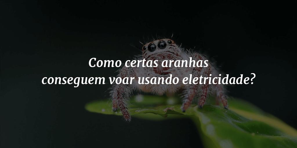 Tem Na Web - Como certas aranhas conseguem voar usando eletricidade?