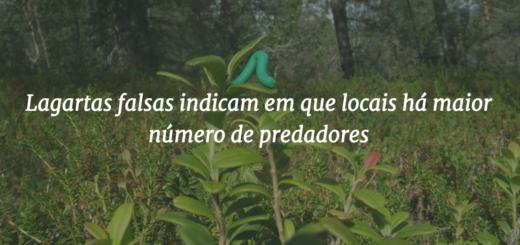 """Capa do post com o título """"Lagartas falsas indicam em que locais há maior número de predadores"""" e a imagem ao fundo de uma lagarta falsa sobre uma folha."""