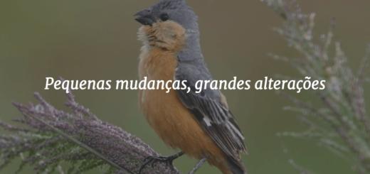 """Capa do post com o título """"Pequenas mudanças, grandes alterações"""", com o pássaro Caboclinho-de-barriga-vermelha ao fundo."""